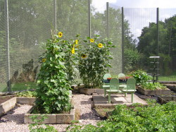 Horticultural therapy South West Yorkshire Partnership NHS Foundation Trust